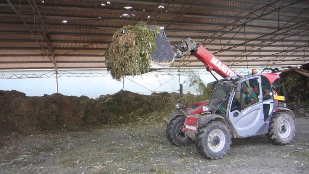 Manitou tại trang trại chăn nuôi bò